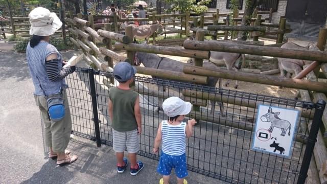 itozu-zoo_0430
